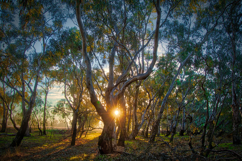 Sun Rise Through the Gums