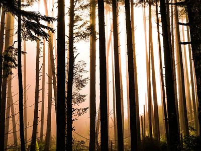 Forest Fog (Color)