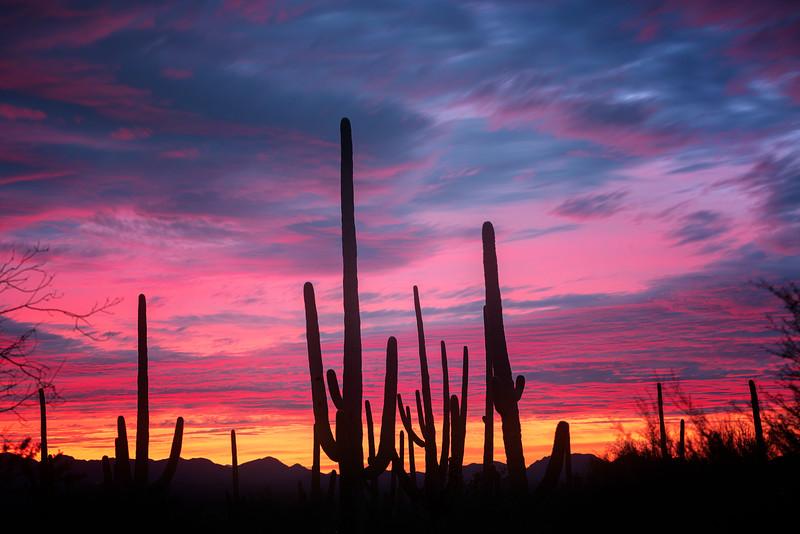 Beautiful sunset in Saguaro National Park