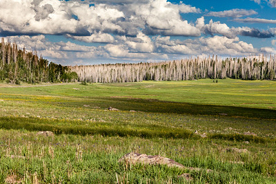 Dying Trees, Dixie National Forest, Utah