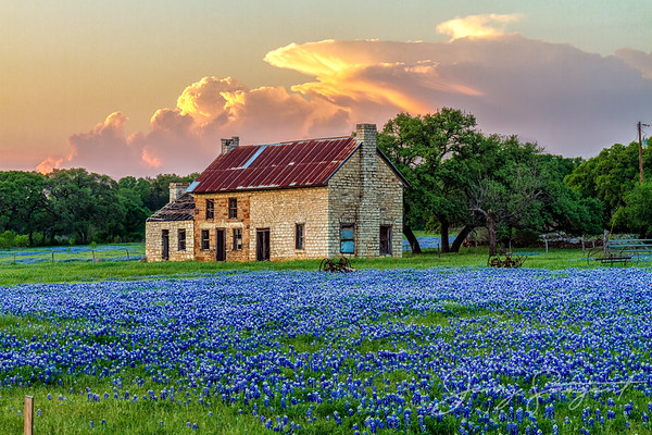 Bluebonnet House