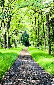 path to no where-