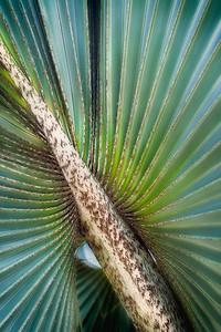 Delicious hues of Green - Mexico