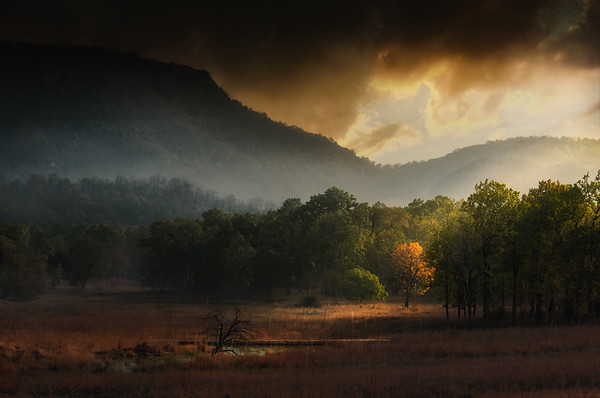 Bandhavgarh National Park - India