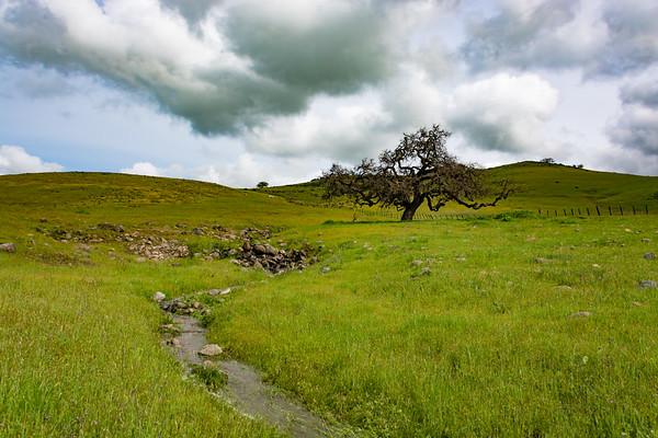 Creek And Tree