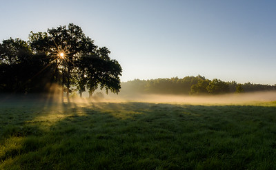 Sunny and misty morning