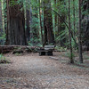 Bench among Redwoods