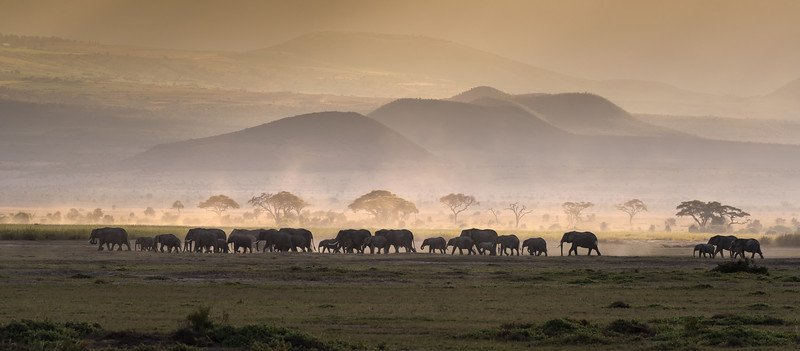 Line of elephants at sunset in Amboseli National Park, Kenya, East Africa