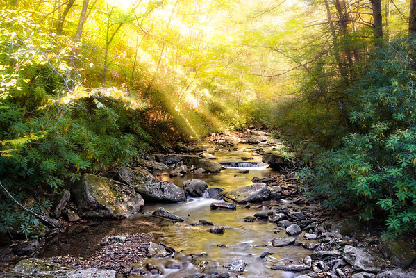 Oct 7 - Flowing Through The Forest<br /> <br /> I took this image of a small stream while driving through Kumbrabow State Forest in West Virginia.  It was late afternoon and the light was beautiful!