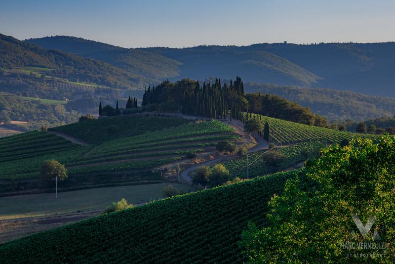 Grapevines in Greve in Chianti, Tuscany