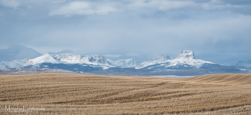 A Treasured Sight for Southern Albertans