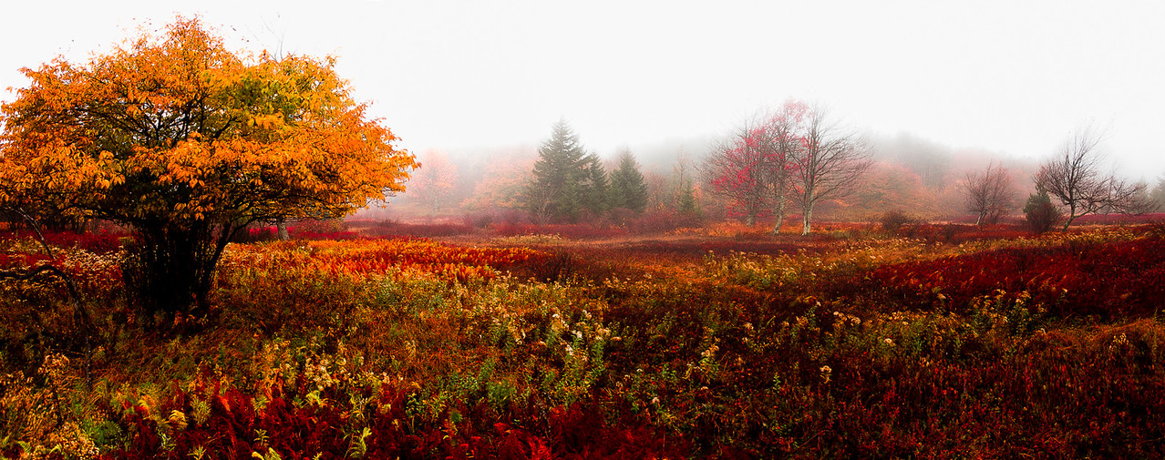 "Autumn on the Plains of Dolly Sods - Augen 2013<br> <a href=""http://www.wilderness50th.org/smithsonian"">Now on view at the Smithsonian, Museum of Natural History, until Spring 2015</a><br> <a href=""http://www.cqjournal.com/winners.html"">Published in Creative Quarterly Magazine Issue 30 Spring 2013</a>"