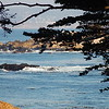 peeking at the pacific - pacific grove, ca