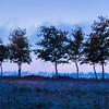 Moon Peeks Through the Treeline