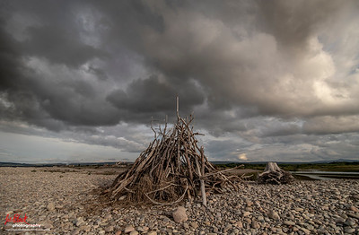 Driftwood at Spey Bay