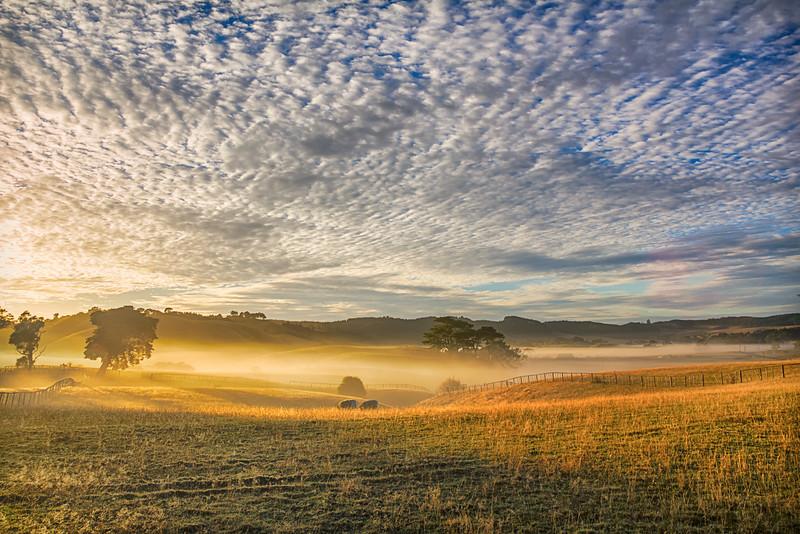 Misty Pasture 2