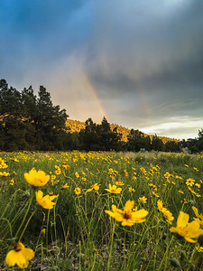Rainbows and Wildflowers