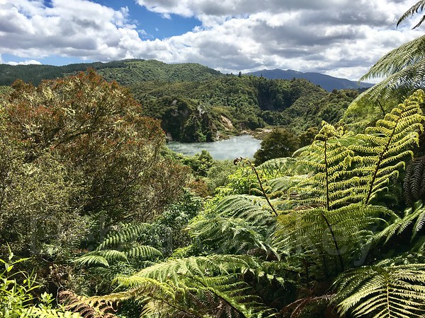 Ferns & Echo Crater, Waimangu Volcanic Valley, Rotorua, New Zealand