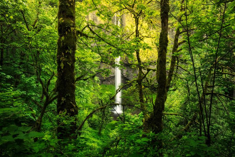 Latourell Falls in Spring
