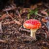 Fungi #warburtonsequoias
