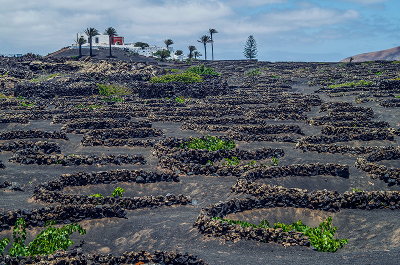 A  Farm  on  Lanzarote .