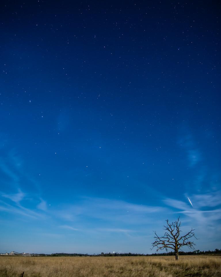 Rohallion Moonlight Dreams