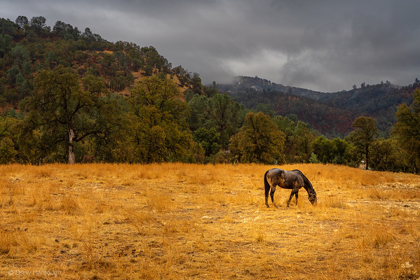 Horse Before the Storm