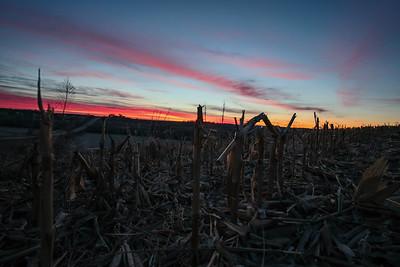 Cornfield Sunrise