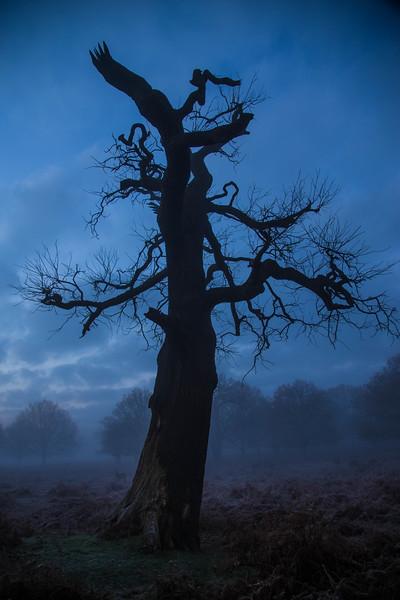 bluetree2.jpg