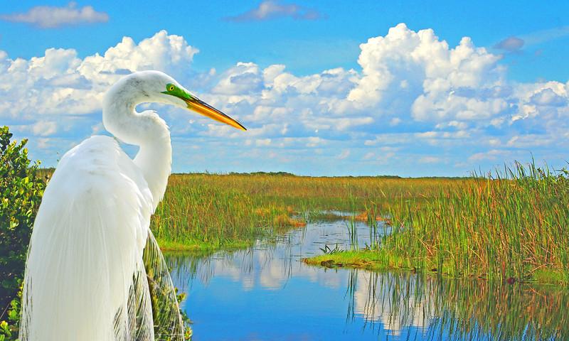 Preserve Florida's Beautiful Big Cypress National Preserve.
