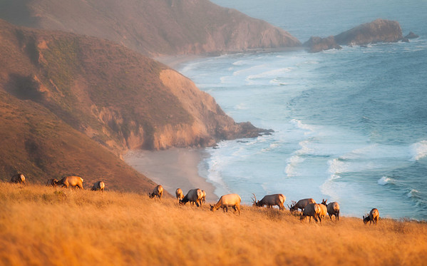 Guardians of Tomales Point