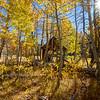 Cabin in Aspens 1
