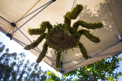 Day #259 - Spider Topiary