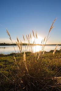 Wild Grass Lakeside