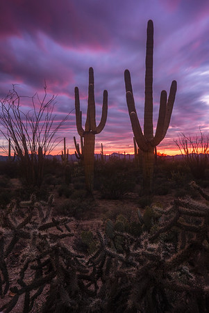 Surreal Sunset in Tucson, Arizona
