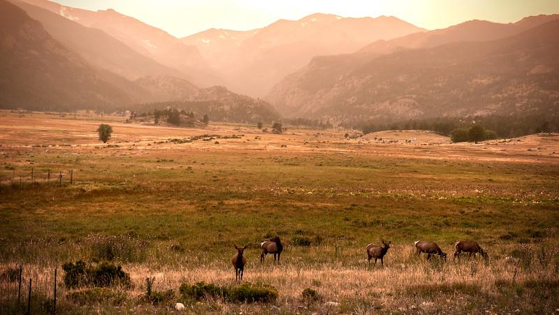 Elk Under Fire Loom