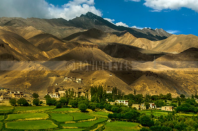 A25:A small Ladakhi village with the greens and the barren complementing each other, Ladakh