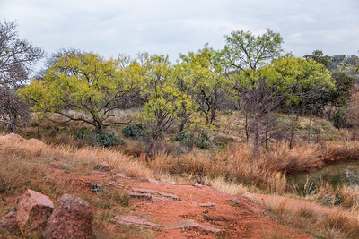 Enchanted Rock Trees