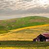 Pastoral Farm Scene
