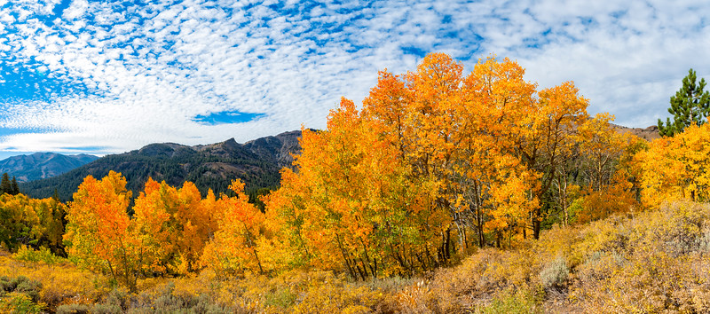 Fall Colors Panorama - Sonora Pass-2