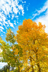 Fall Colors - Sonora Pass-11