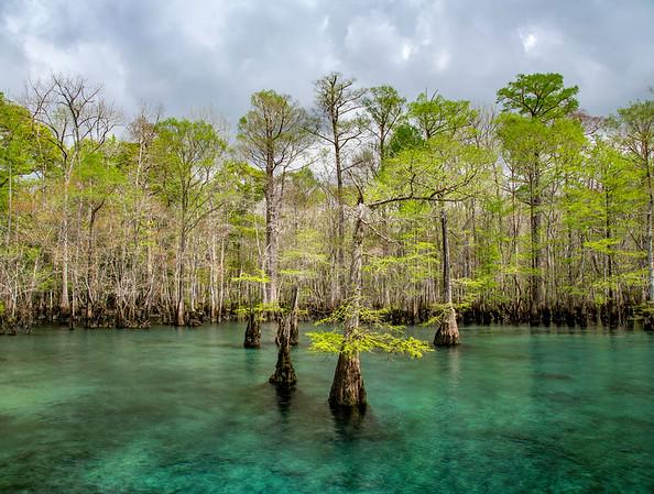 Morrison Springs | Florida
