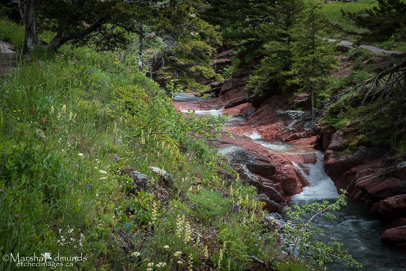 Creek Coursing Through Red Rock Canyon