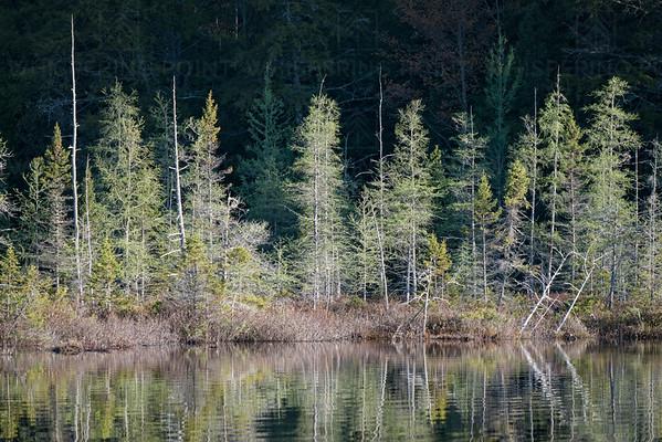 Spruce Shoreline (153)