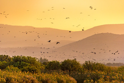 Sunset in Hula Valley