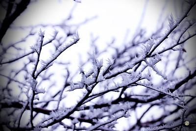 Tree Crystals