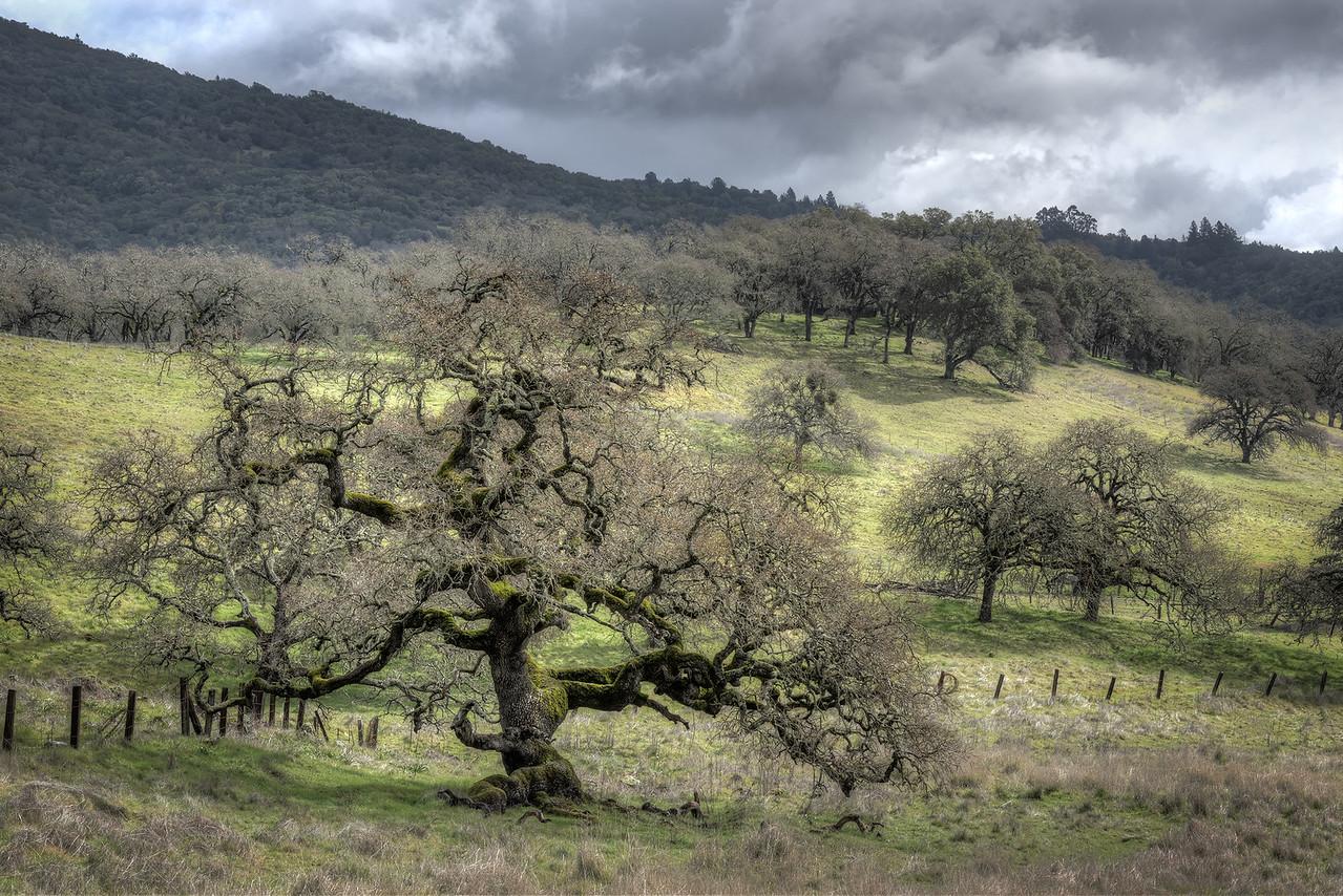 Mesa Ranch, Sonoma Valley, California