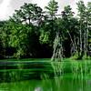 Swamp #2