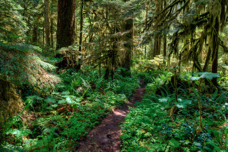 Hiking Path near the Carbon River, Mt. Rainier National Park, Washington