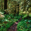 Hiking Path near the Carbon River, Mt. Rainier National Park, Washington
